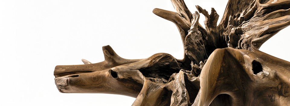 """Human Roots"" – Les racines de l'homme"